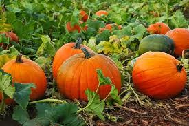 #2 pumpkin